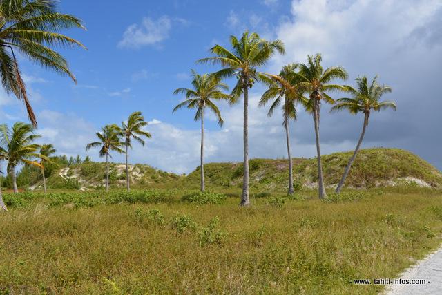 Une partie du site du futur complexe Tahiti Nui Ocean Foods est recouvert de tas de gravats issus de la destruction des anciens bâtiments militaires de Hao.