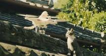 Un drone pour dénicher les oeufs de goélands sur les toits de Trouville