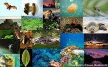 Les ONG appellent les citoyens européens à se mobiliser pour la biodiversité
