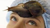 Extrait de raisin contre bave d'escargot: polémique cosmétique autour d'une publicité
