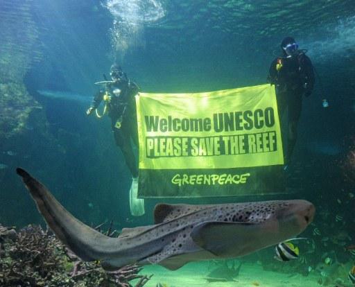 Des militants de Greenpeace appelent l'Unesco à sauver la grande barrière de corail © AFP PHOTO / Greg WOOD