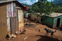 Au Brésil, il y a plus de chiens que d'enfants