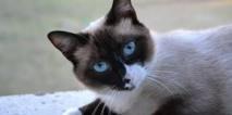 Elle démasque sur Le Bon Coin les voleurs de son chat