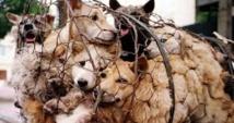Les défenseurs des animaux muselés pour le festival chinois de la viande de chien