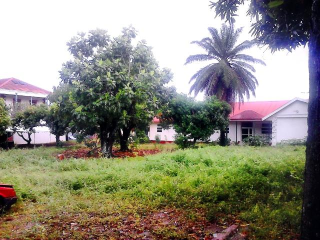 """Le terrain affecté à l'Etat """"correspond à la parcelle et les constructions qui accueillaient anciennement le dispensaire des Tuamotu-Gambier ainsi qu'une partie des locaux de Vaiami, actuellement inoccupée"""", indique le ministère des Affaires foncières."""