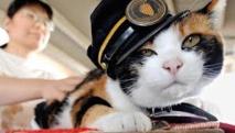 Japon: mort du chat Tama, chef de gare et aimant à touristes