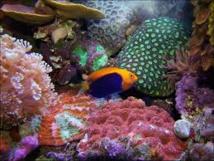 Coraux, poissons: un réchauffement de 2°C limiterait la casse dans les océans