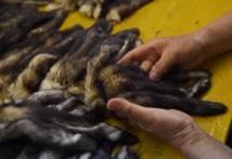 Chine: dans la ville des JO-2022, un paradis controversé de la fourrure