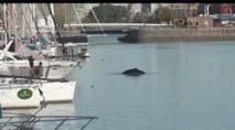 Une baleine perdue dans le port de Buenos Aires