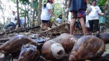 La population a joué le jeu pour sauver les plantations de l'île
