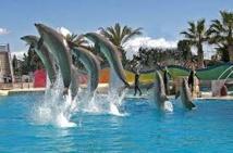 """Marineland, plus grand parc marin d'Europe, confronté aux """"anti-delphinariums"""""""