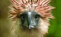 Philippines: un aigle d'une espèce menacée abattu après avoir été relâché dans la nature