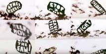 Un demi-million de fourmis manifestent à l'appel du WWF pour l'Amazonie