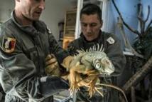 SOS serpents: quand la caserne des pompiers s'improvise refuge à reptiles