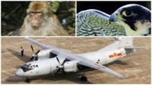Pékin déploie des faucons et des singes avant son grand défilé militaire