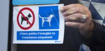 Un pictogramme pour l'accueil des chiens guides, partout, comme le veut la loi