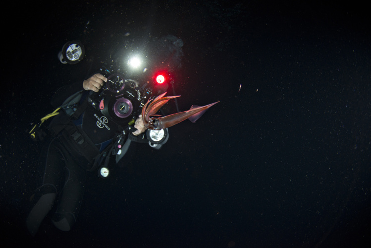 Deux chasseurs d'images immortalisent la vie planctonique du fenua