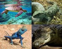 Reptiles et amphibiens: une espèce sur cinq menacée en France