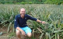 Le ministre de l'Agriculture en visite à Moorea :  point sur les lots agricoles affectés à la culture d'ananas