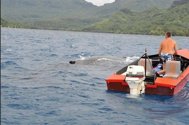 La photo de l'homme s'approchant d'une baleine en bateau daterait de 2009