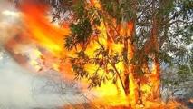 Multiplication des incendies de forêt en Nouvelle-Calédonie