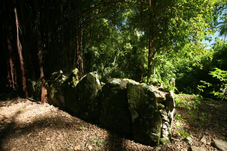 Carnet de voyage à Huahine : dans la forêt enchantée…