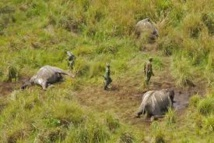RDC : quatre fonctionnaires tués en luttant contre le braconnage d'éléphants