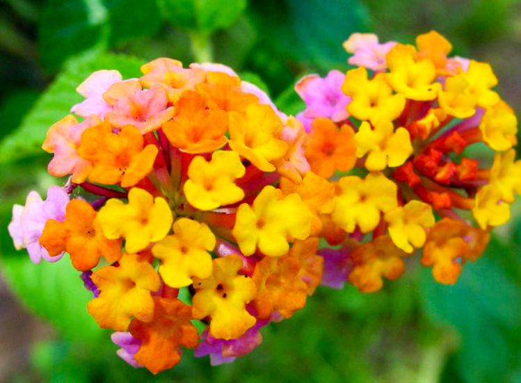 Voyage botanique dans les jardins de Vaipahi