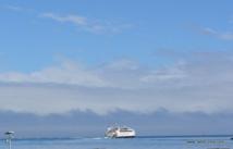Une baleine heurte l'arrière d'un ferry qui quittait Moorea