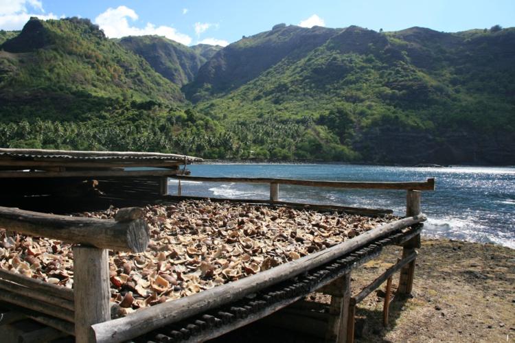 La filière coco à la recherche d'un avenir rentable