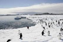 Antarctique: nouvelle réunion sur la création d'un sanctuaire marin