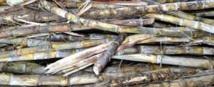 Electricité/outre-mer: le gouvernement renforce le soutien public à la biomasse