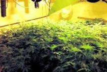 Marseille: la principale découvre une plantation de cannabis dans un local technique du collège