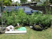 La drogue saisie a été détruite sur instruction du parquet.