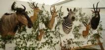 Bardot demande à Royal d'interdire l'importation des trophées de chasse