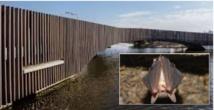 """Le """"batbridge"""", pont pour chauves-souris, construit aux Pays-Bas"""