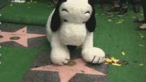 Snoopy, star planétaire de la bande-dessinée, a son étoile à Hollywood