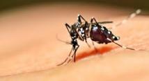Nîmes: une étude de santé publique lancée après sept cas de dengue cet été