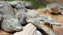 Indonésie: projet d'île-prison gardée par des crocodiles pour les trafiquants de drogue
