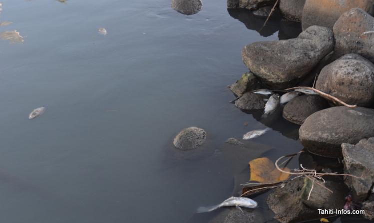 Les cadavres s'entassent sur les rives de la rivière, pendant que des milliers d'autres sont rejetés dans le lagon