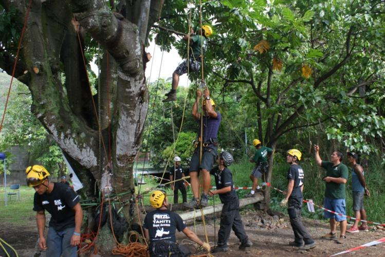 Les cordistes font démonstration de leur art à Paea