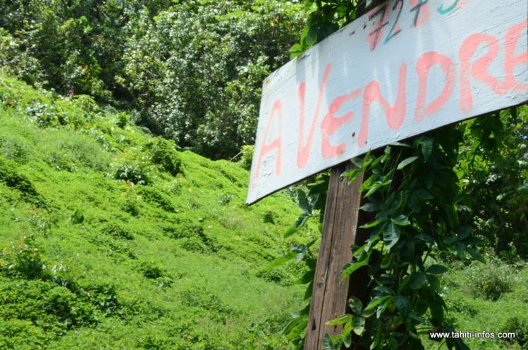 Foncier : une mission sénatoriale attendue en Polynésie