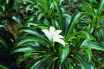 Polynésie française: menaces sur de nombreuses espèces uniques au monde