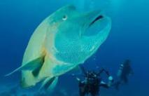La France annonce la création prochaine de la 5ème plus grande réserve marine du monde