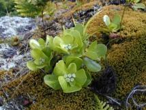 Deux tiers de nos plantes endémiques menacés