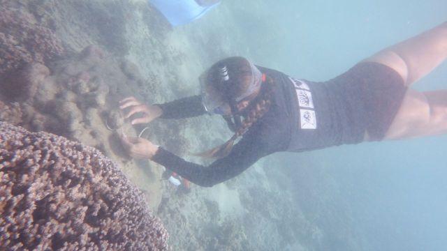 El Niño : Reef Check appelle les ultramarins au suivi des coraux