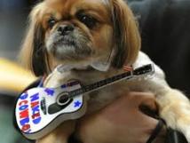 A New York, Times Square aboie au rythme d'un concert canin