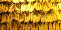 Inde: le voleur contraint de manger 40 bananes pour restituer son butin