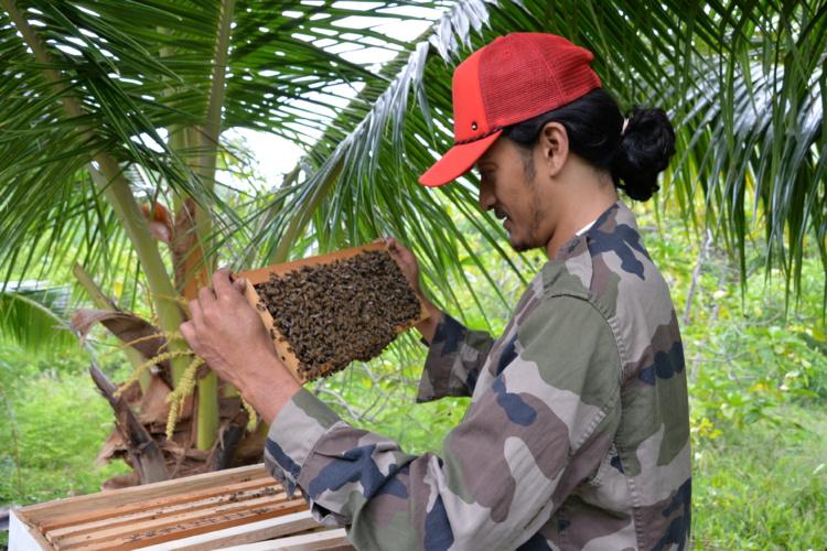 L'agriculture au cœur du développement de Ua Pou