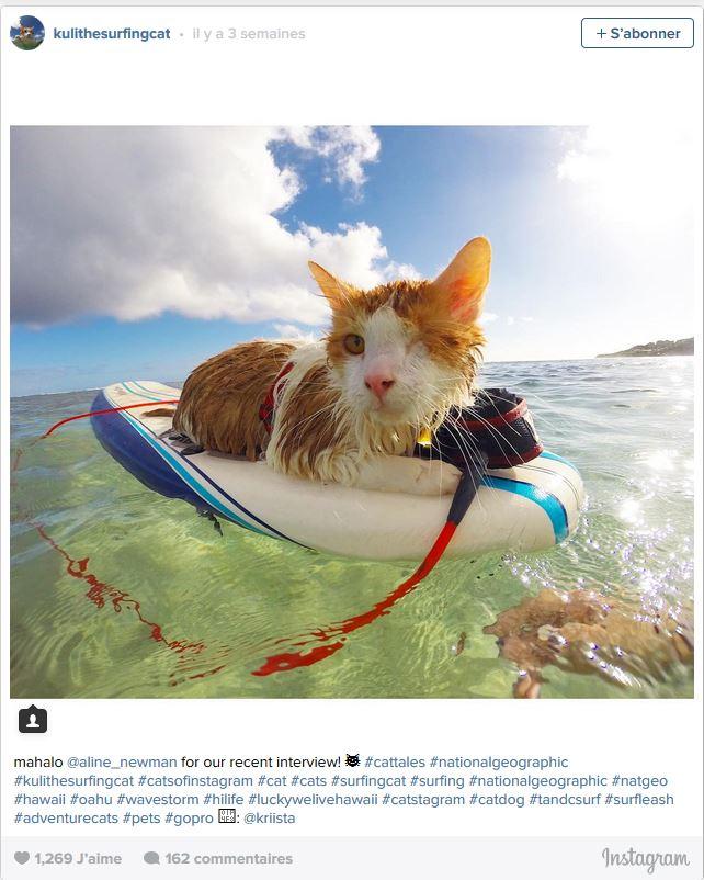 Kuli est le diminutif de Nanakuli qui veut dire : « qui parait aveugle ». Cela ne l'a pas empêché d'apprendre à apprécier le surf depuis qu'il n'a que six mois.